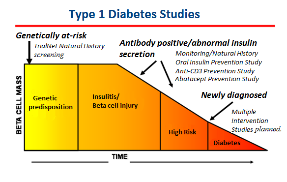 Type  Diabetes Trialnet Natural History Study